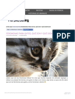 feromonas gatos