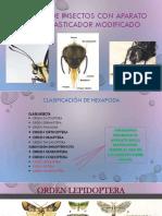 insectos con aparato bucal masticador