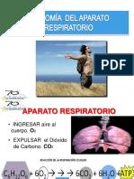 Anatomia Aparato Respiratorio 2015 (1)