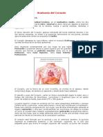 7353032-Anatomia-Del-Corazon.pdf