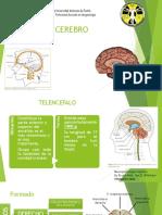 Cerebro Expo