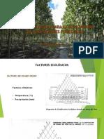 Bases Ecológicas Para La Silvicultura de Plantaciones