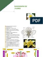 organografia de las flores