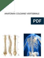muschii coloanei vertebrale