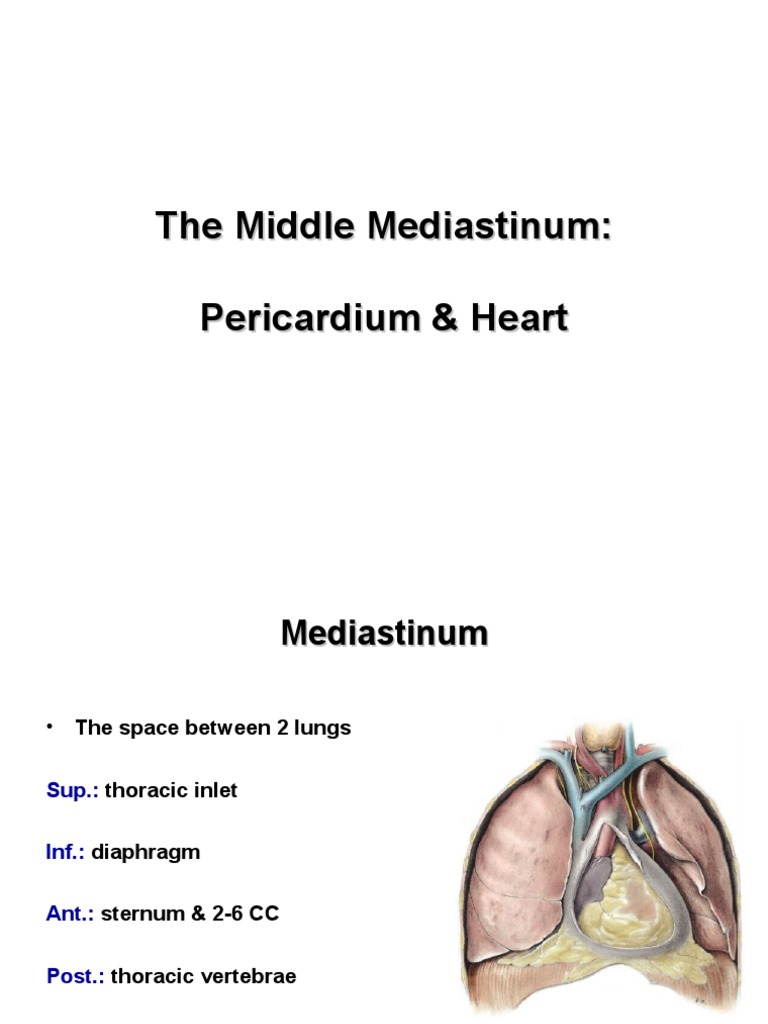 Anatomy Lecture 6 Pericardium And The Heart Slides