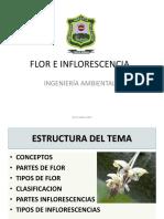 Clase8 Flor e Inflorescencias