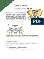Descripción Anatómica de La Pelvis