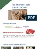 Animales Destinados Para Consumo Humano