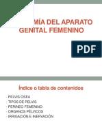 Anatomia Del Aparato Genital Femenini