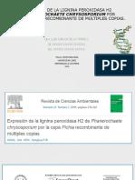 EXPRESIÓN DE LA LIGNINA PEROXIDASA H2 DEPHANEROCHAETE CHRYSOSPORIUMPOR LACEPAPICHIARECOMBINANTE DE MÚLTIPLES COPIAS..pptx