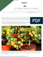 Claves para cultivar árboles frutales en macetas _ Notas _ La Bioguía.pdf