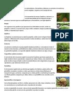 Taxonomía de Las Plantas