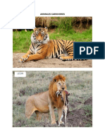 ANIMALES CARNIVOROS.docx
