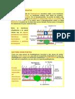 Revista Colombiana de Biotecnología.docx