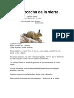 La Vizcacha de La Sierra