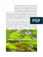 FrutalAvellano (1)