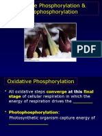 Chapter 19 Oxidative Phosphorylation Posted