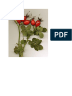 Mawar Unik.docx