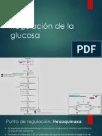 Regulación de la glucolisis
