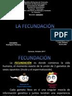 fecundacion-171013144917