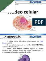 Citologia Nucleo e Ciclo Celular 2018.2