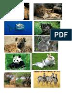 animales oviparos.docx