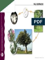 Clasificación y formas de desarrollo.Vegetales.pdf
