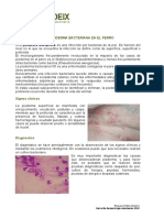 Pioderma Bacteriana en El Perrobacterias