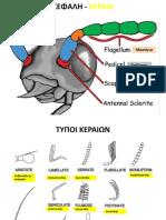 anatomia entomon_metamorphosi_pdf.pdf