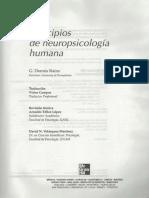 Cap 6 Lenguaje en Principios de Neuropsicologia Humana Dennis Rains 125 152 Opt (2)