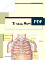 Thorax Review 2