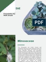 Mimosaceae.pptx