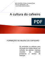 A Cultura Do Cafeeiro