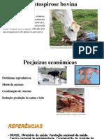 Leptospirose bovina