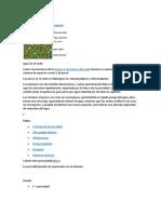 280380386-informe-1-Edafo