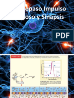 Sinapsis Química-Neurotransmisores-Contracción Muscular 3° Medio.pdf