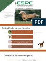 Aparato Digestivo de Los Equinos Expo (1)