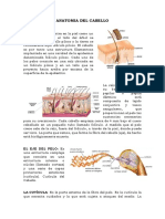 ANATOMIA DEL CABELLO.docx