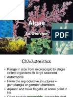 Algae.ppt