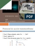 ekgrama 2003