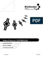Syndecan1 (CD138) RGP009R Biovendor-3