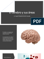 El Cerebro y sus áreas