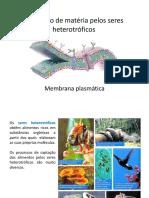 pp1 - Membrana plasmática