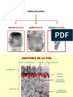 DACTILARES.pdf