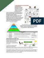 La Nutrición en Los Ecosistemas