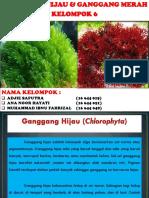 PPT Ganggang Hijau & Ganggang Merah