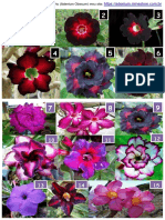 Catalogo de Cores Rosas Do Deserto