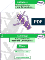 Biological Molecules Water Carbohydrates - Copy