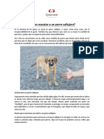 Cómo rescatar perros callejeros.docx