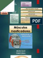 Músculos de la cabeza(1).pptx